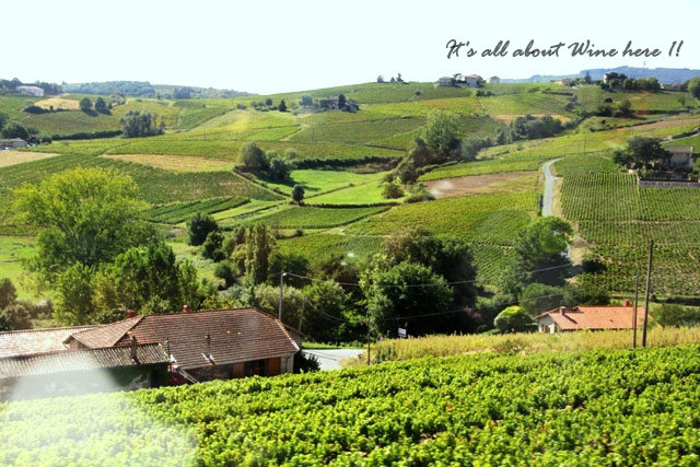 Beaujolais-Vineyards,-France-0