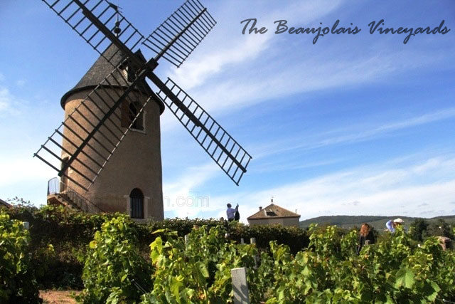 beaujolais vineyards, french vineyards, vineyard trip in France